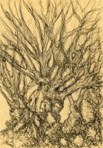 Les arbres de Puli