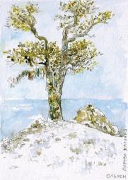 L'arbre à voeux