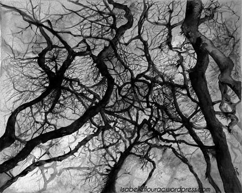 Acerifolia, encre de Chine, Isabelle Flourac