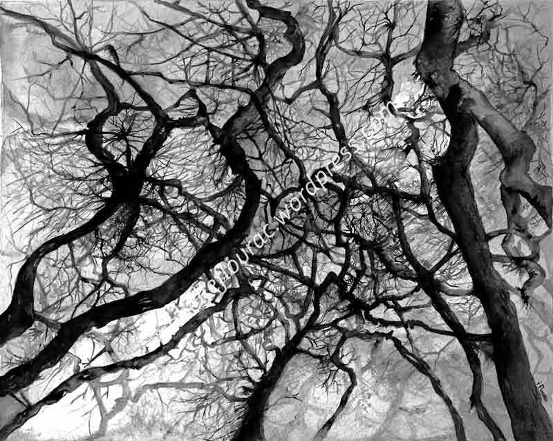 Acerifolia, encre de chine d'Isabelle Flourac, représentant une forêt vue en contre plongée.